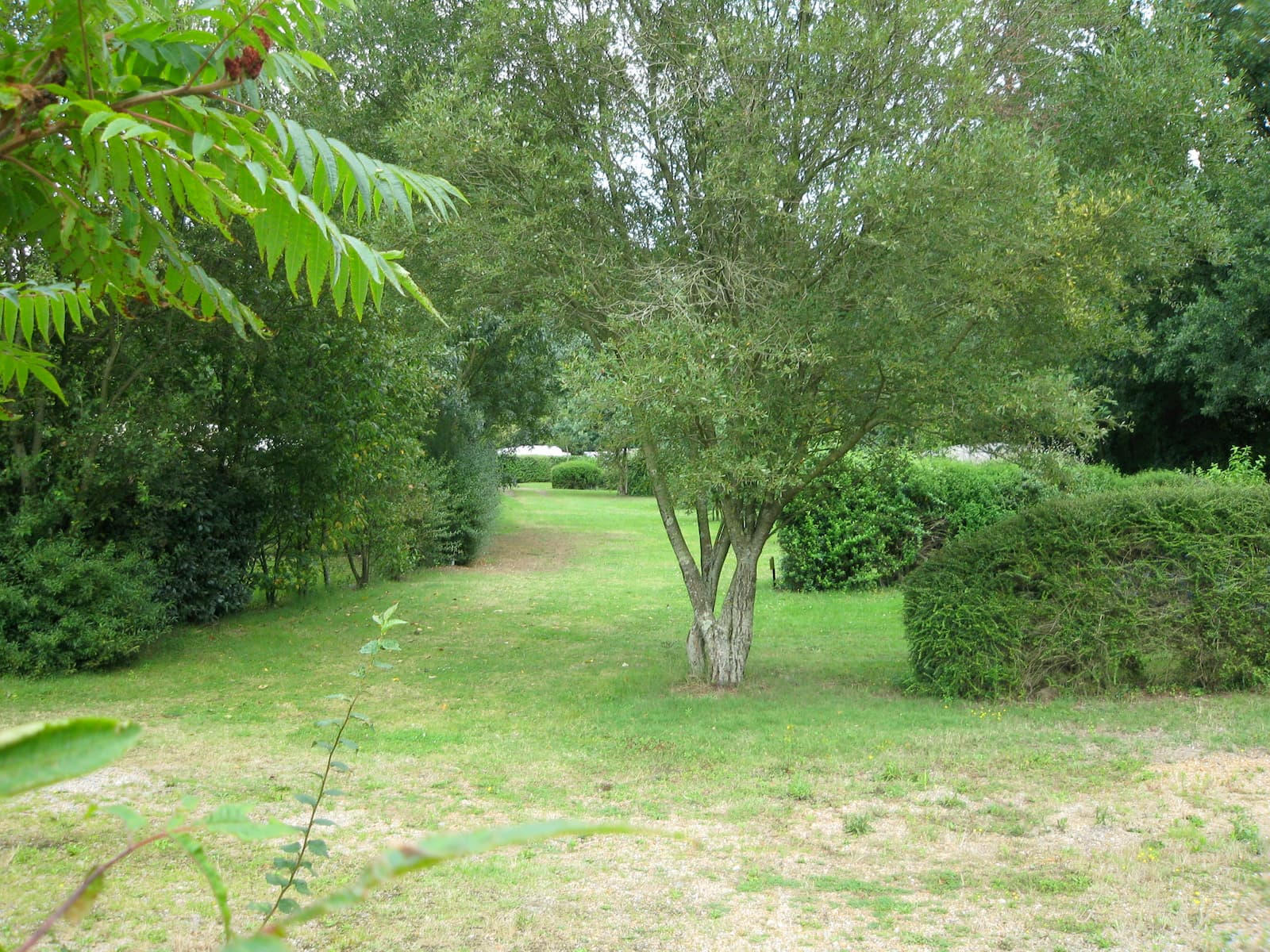 camping-belle-riviere-champ-arbre